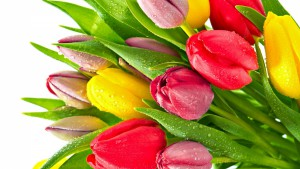 tulips-flowers-bright-bunch-drop-freshness-1920x1080