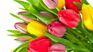 tulips-flowers-bright-bunch-drop-freshness-1920x1080